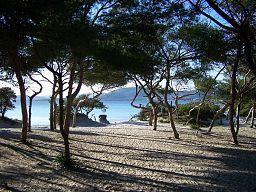 prie jūros miškelis Rojaus_miskelis.medium